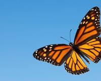 bcn butterfly farm